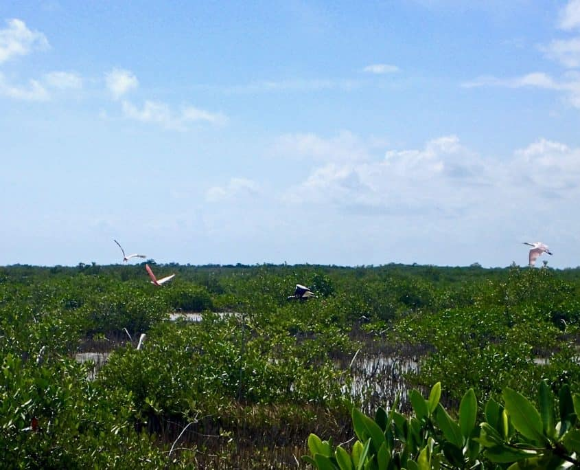 Cycling through Sian Ka'an Biosphere Reserve