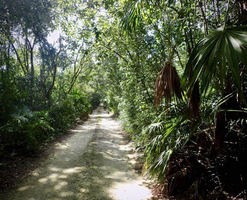 Cycling through Sian Ka'an Biosphere Reserve - Road through the jungle