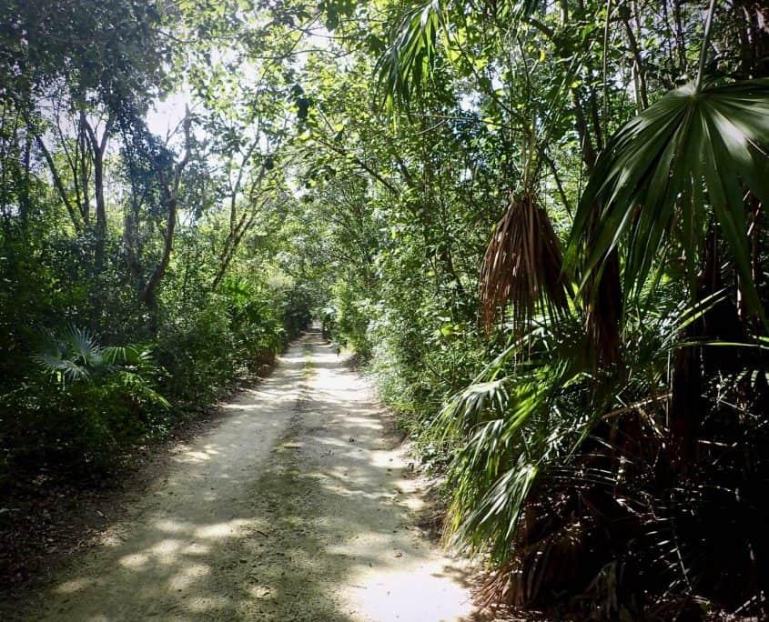 Cycling through Sian Ka'an Biosphere Reserve - Road through the jungle