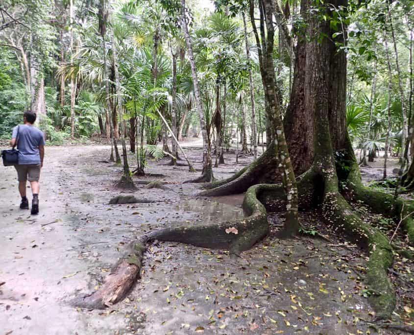 Tikal - Nice walking through the jungle that is surrounding Tikal