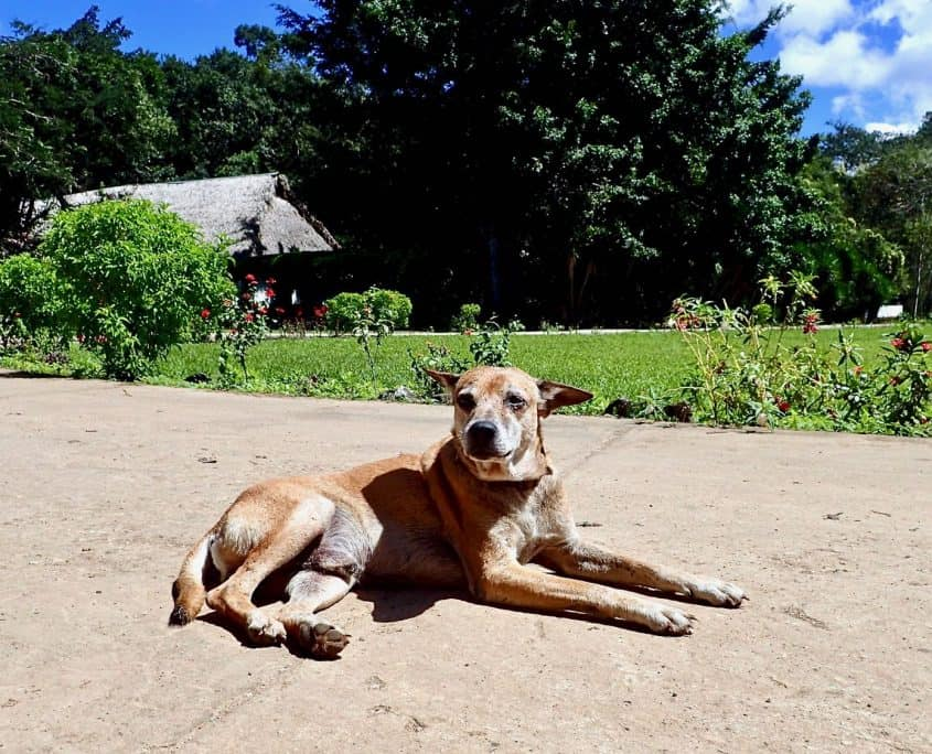 Welcomeing dog at Finca Ixobel