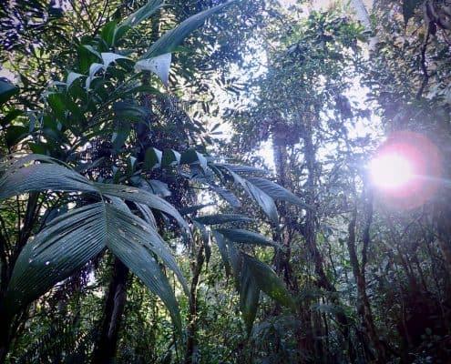 Biotopo del Quetzal in Guatemala