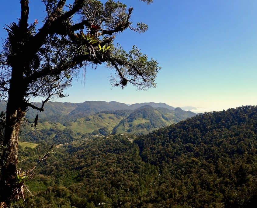 One of the hiking trails leads to a nice viewpoint overlooking the cloud forest of the Biotopo del Quetzal