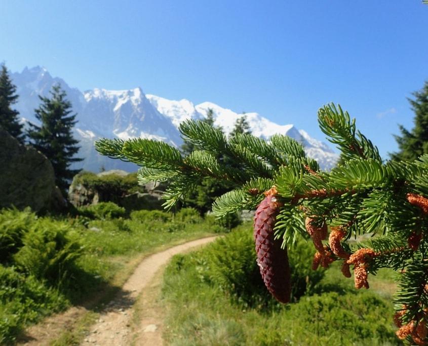 TMB day 11 - La Flégère to Les Houches